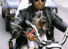 chien-moto-bikers_01