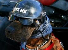 moto-chien-biker-antivol