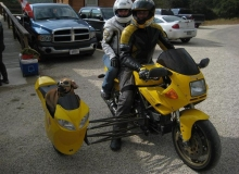 moto-chien-side-car