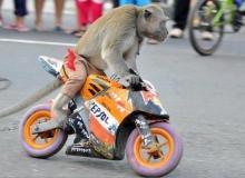 moto-chien-singe-repsol