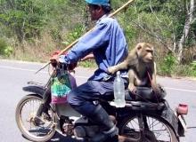 moto-singe-cool