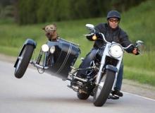 chien-panier-side-car
