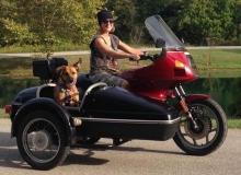 chien-side-car-BMW